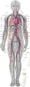 hipokinezja